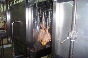 Rastro de Pollos. Lavado de Pollos